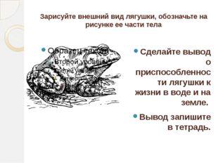 Зарисуйте внешний вид лягушки, обозначьте на рисунке ее части тела Сделайте в