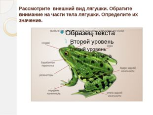 Рассмотрите внешний вид лягушки. Обратите внимание на части тела лягушки. Оп
