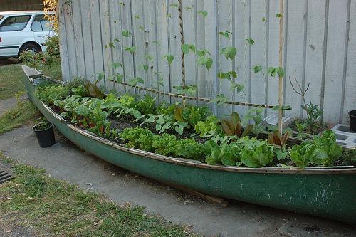C:\Users\Марина\Desktop\отходы в доходы\огород их старой лодки.jpg