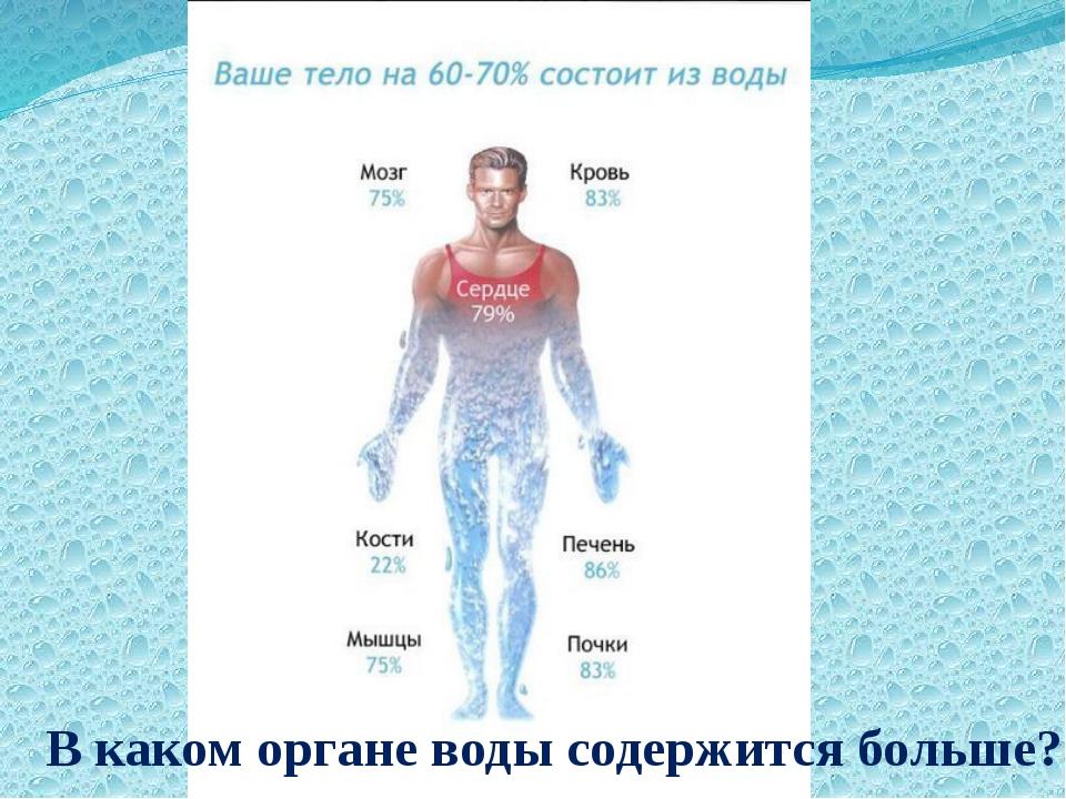 В каком органе воды содержится больше?