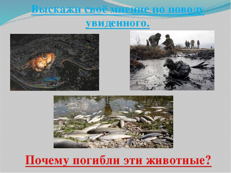 Выскажи своё мнение по поводу увиденного. Почему погибли эти животные?