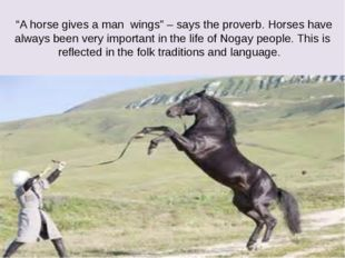 """""""A horse gives a man wings"""" – says the proverb. Horses have always been very"""