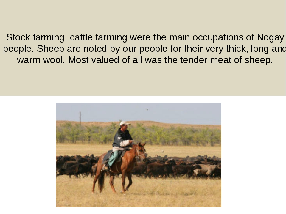 Stock farming, cattle farming were the main occupations of Nogay people. Shee...