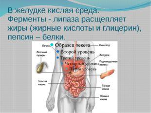 В желудке кислая среда. Ферменты - липаза расщепляет жиры (жирные кислоты и г