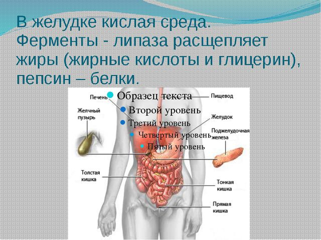 В желудке кислая среда. Ферменты - липаза расщепляет жиры (жирные кислоты и г...