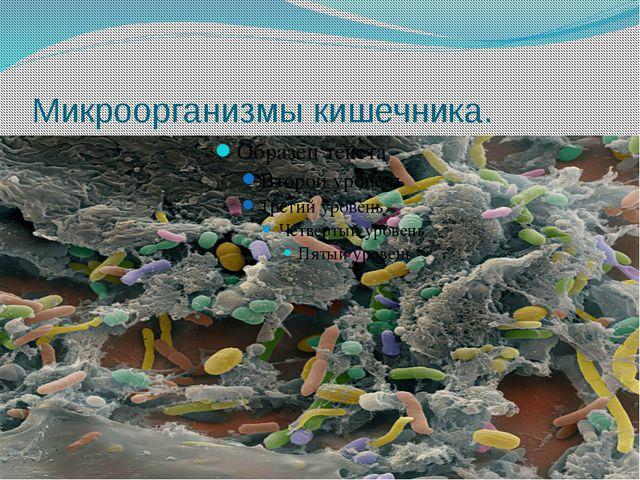 Микроорганизмы кишечника.