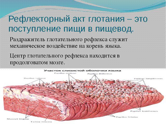 Рефлекторный акт глотания – это поступление пищи в пищевод. Раздражитель глот...