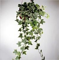 Растения Близнецов / Тайны комнатных растений / House-Plants