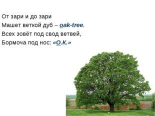 От зари и до зари Машет веткой дуб – oak-tree. Всех зовёт под свод ветвей, Бо