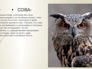 СОВА- Единственная птица, у которой оба глаза расположены рядом, а не по бока