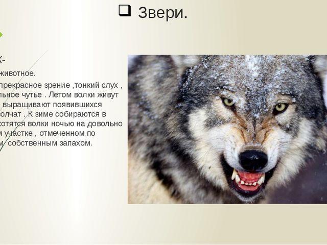 Звери. ВОЛК- хищное животное. У волка прекрасное зрение ,тонкий слух , удивит...