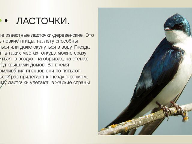 ЛАСТОЧКИ. Самые известные ласточки-деревенские. Это очень ловкие птицы, на ле...