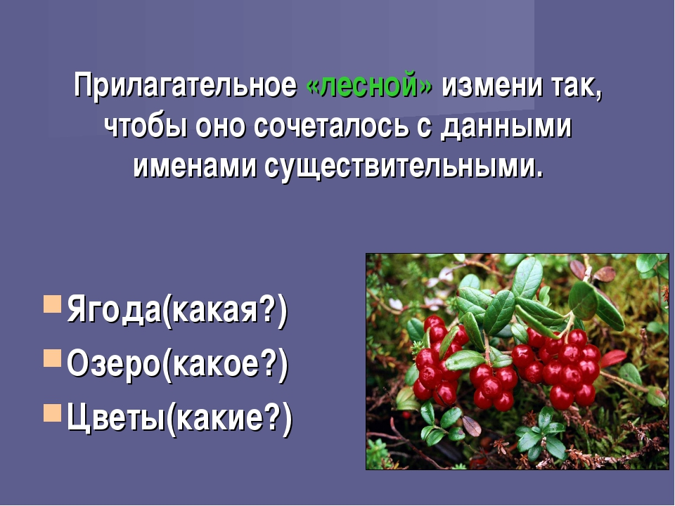 Прилагательное «лесной» измени так, чтобы оно сочеталось с данными именами су...