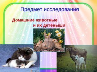 Предмет исследования Домашние животные и их детёныши http://percha-shodunka.u
