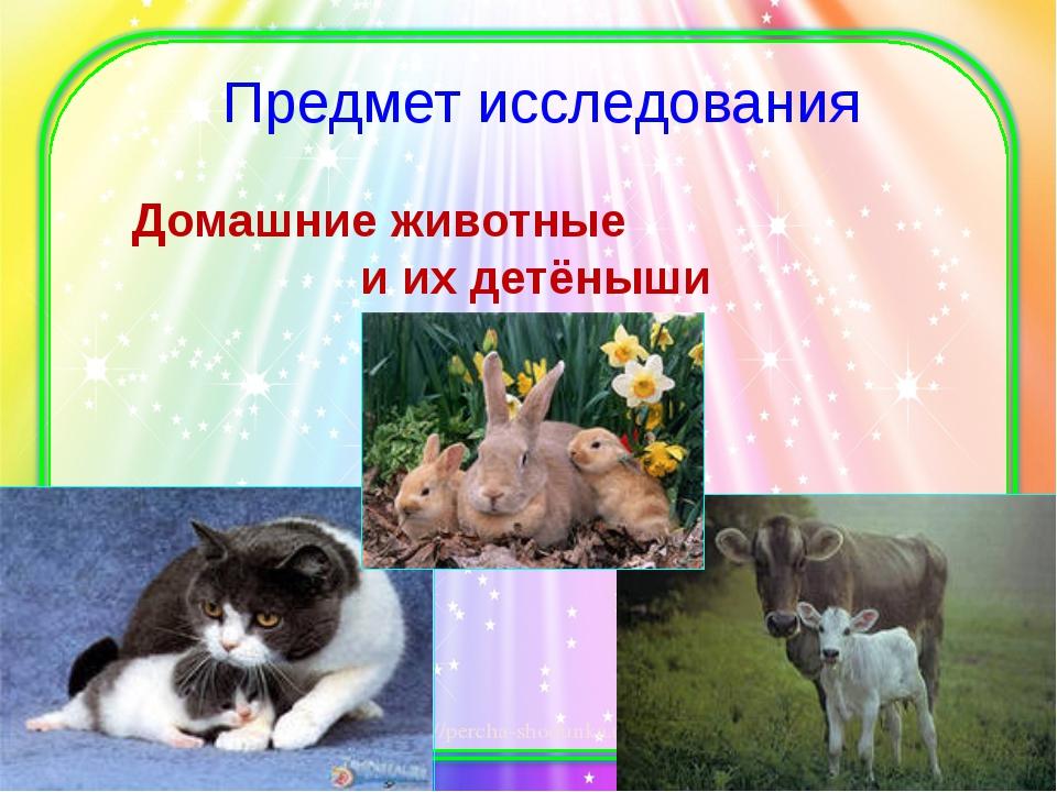 Предмет исследования Домашние животные и их детёныши http://percha-shodunka.u...