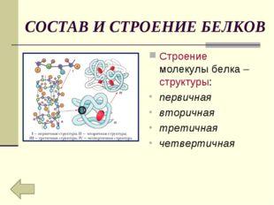 СОСТАВ И СТРОЕНИЕ БЕЛКОВ Строение молекулы белка – структуры: первичная втори