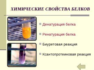 ХИМИЧЕСКИЕ СВОЙСТВА БЕЛКОВ Денатурация белка Ренатурация белка Биуретовая реа