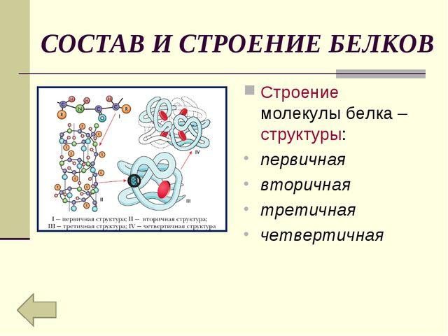 СОСТАВ И СТРОЕНИЕ БЕЛКОВ Строение молекулы белка – структуры: первичная втори...