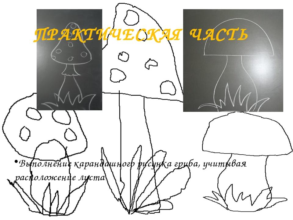 ПРАКТИЧЕСКАЯ ЧАСТЬ Выполнение карандашного рисунка гриба, учитывая расположен...