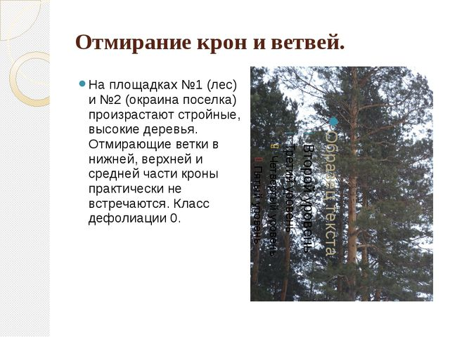 Отмирание крон и ветвей. На площадках №1 (лес) и №2 (окраина поселка) произра...
