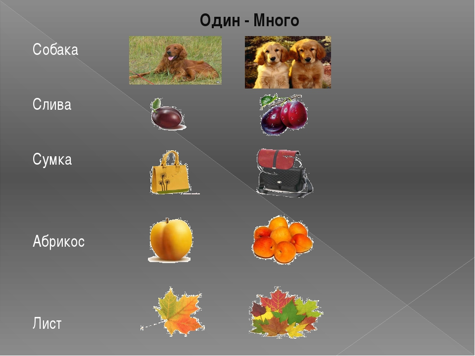 Один - Много Собака Слива Сумка Абрикос Лист