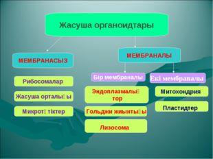 Жасуша органоидтары МЕМБРАНАСЫЗ МЕМБРАНАЛЫ Бір мембраналы Екі мембраналы Рибо
