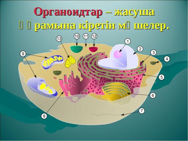 Органоидтар – жасуша құрамына кіретін мүшелер.