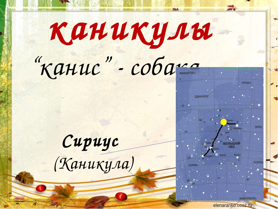 """каникулы """"канис"""" - собака Сириус (Каникула)"""