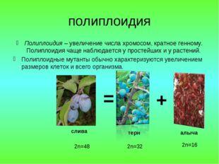 полиплоидия Полиплоидия – увеличение числа хромосом, кратное генному. Полипло