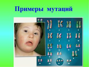 Примеры мутаций
