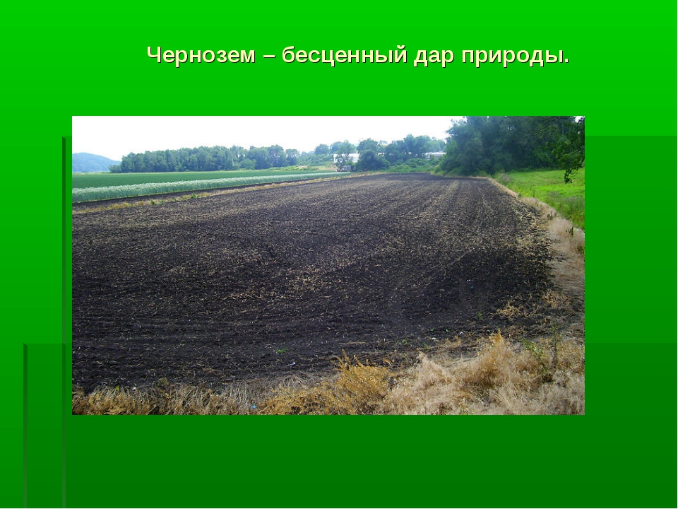 Чернозем – бесценный дар природы.