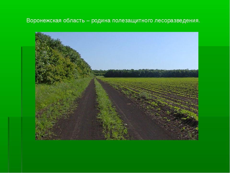 Воронежская область – родина полезащитного лесоразведения.