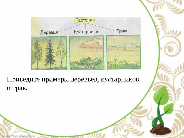 Приведите примеры деревьев, кустарников и трав.