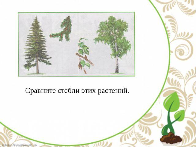 Сравните стебли этих растений.