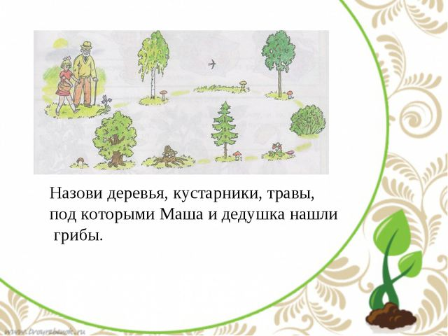 Назови деревья, кустарники, травы, под которыми Маша и дедушка нашли грибы.