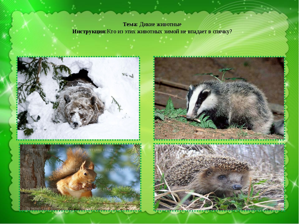 Тема: Дикие животные Инструкция:Кто из этих животных зимой не впадает в спяч...