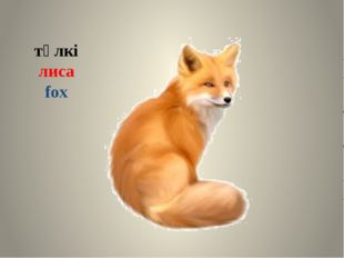 түлкі лиса fox