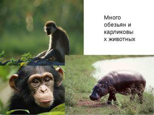 Много обезьян и карликовых животных