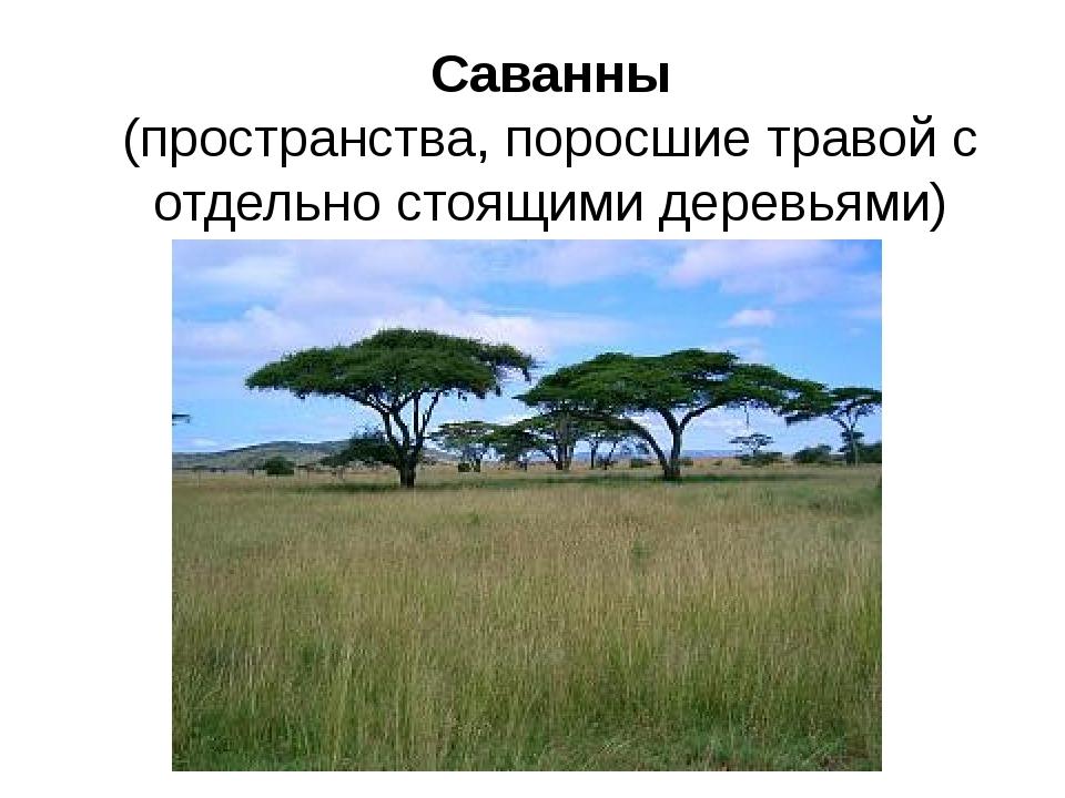 Саванны (пространства, поросшие травой с отдельно стоящими деревьями)