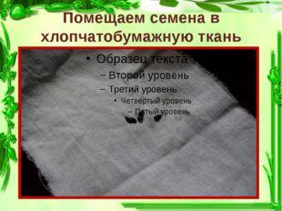 Помещаем семена в хлопчатобумажную ткань