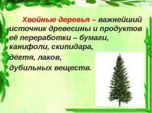 Хвойные деревья – важнейший источник древесины и продуктов её переработки –
