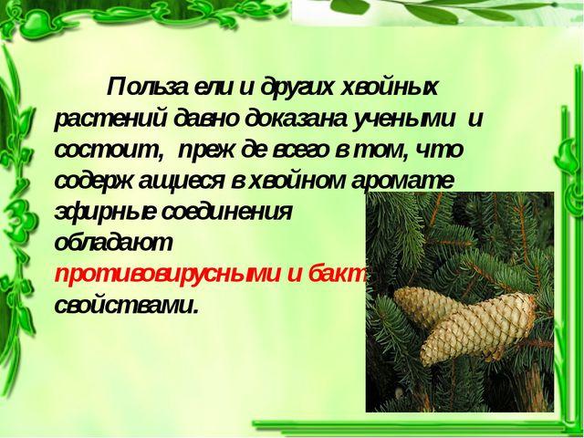 Польза ели и других хвойных растений давно доказана учеными и состоит, пре...