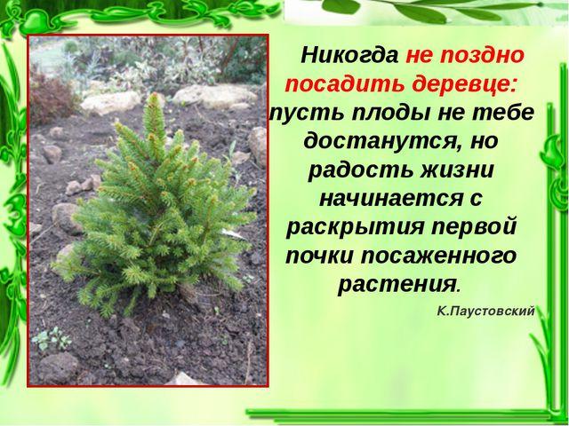 Никогда не поздно посадить деревце: пусть плоды не тебе достанутся, но радос...