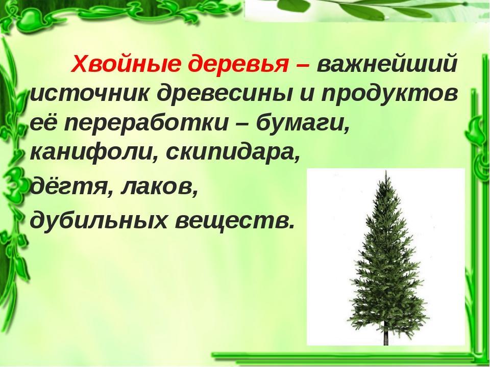 Хвойные деревья – важнейший источник древесины и продуктов её переработки –...