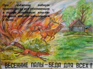 При поджогах гибнут практически все обитающие в траве животные: кто-то сгора
