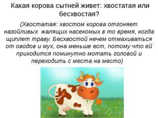 Какая корова сытней живет: хвостатая или бесхвостая? (Хвостатая: хвостом кор