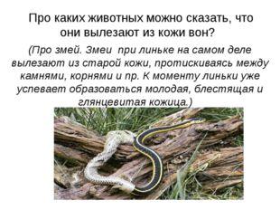 Про каких животных можно сказать, что они вылезают из кожи вон?  (Про змей.