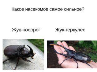 Какое насекомое самое сильное? Жук-носорог Жук-геркулес