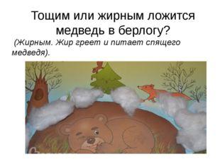 Тощим или жирным ложится медведь в берлогу? (Жирным. Жир греет и питает спящ
