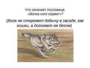 Что означает пословица: «Волка ноги кормят»? (Волк не стережет добычу в заса